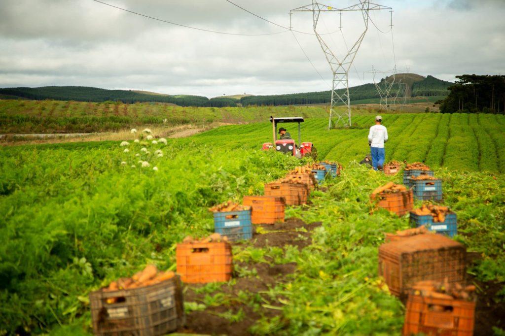 Paradigmas da agricultura e o uso de fertilizantes orgânicos